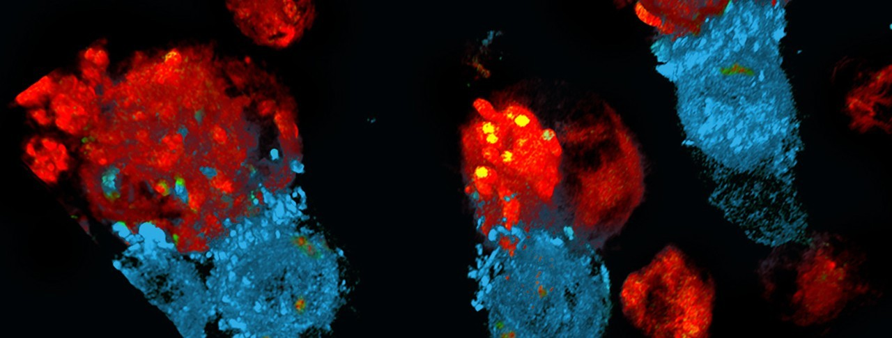 Cell and Gene header image UP 2.jpg